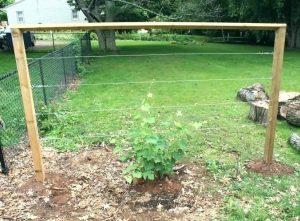 robide zica vrt